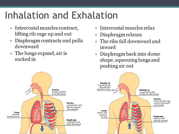 Inhalation and Exhalation Poster